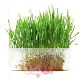 bộ trồng cỏ mèo 1