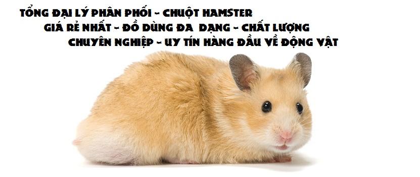 chuot-silce1