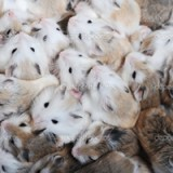 depositphotos_2651878-Many-hamsters-top-view_zps2f493722
