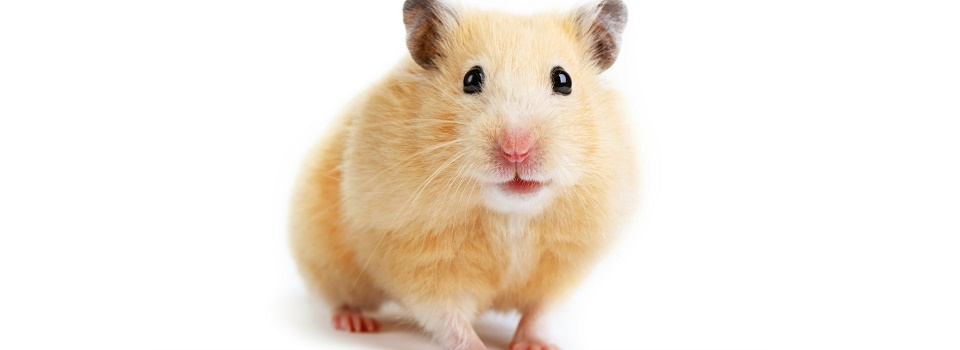 hamster-slice-1