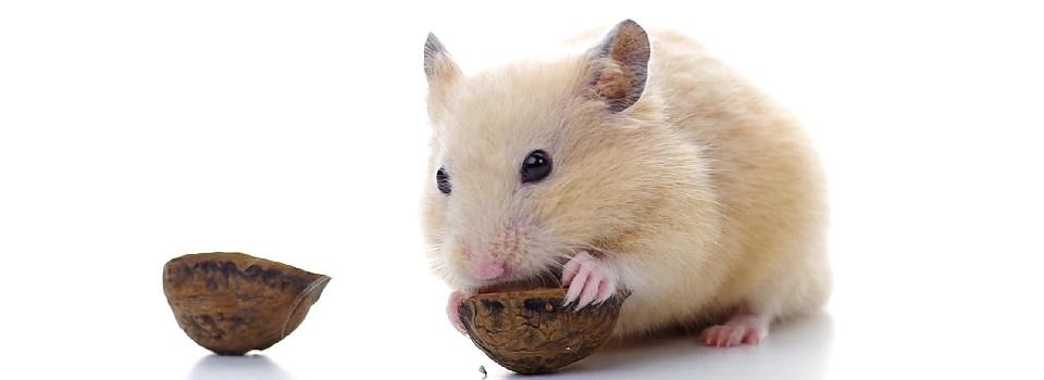 hamster-slice-2