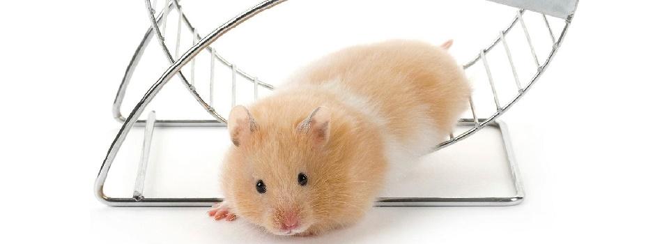 hamster-slice-3