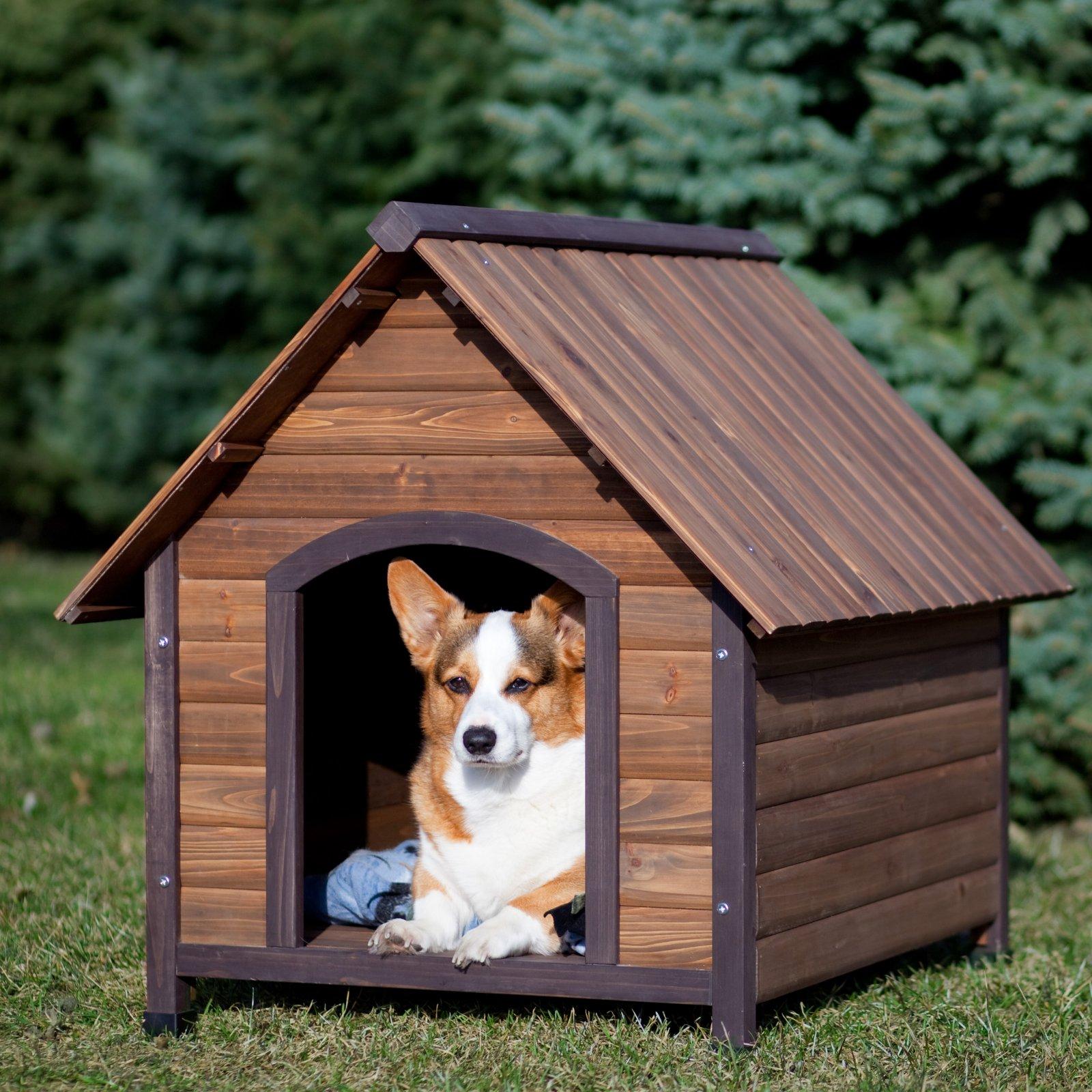 Kết quả hình ảnh cho nhà gỗ cho chó