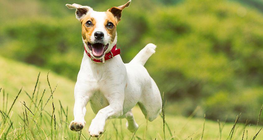 14-top-terrier-breeds
