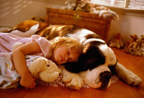 1426243061000_getty_rm_photo_of_girl_with_saint_bernard