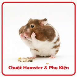 Hamster with cheek pouches stuffed full of food