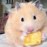 hamster367