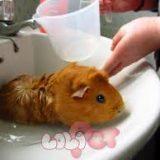 GP tắm