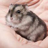 huan luyen hamster 2