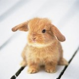 1 - Thỏ xinh