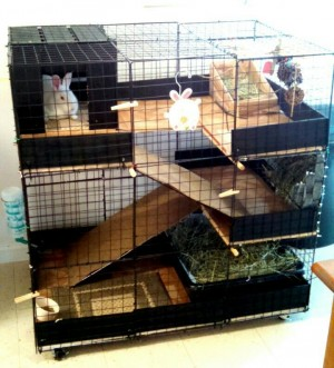 603946bc787044985f4cd35e7b30f371--bunny-cages-rabbit-cages