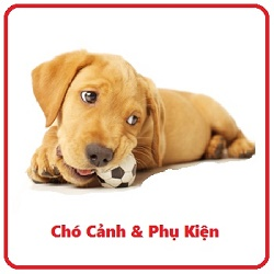 Dog_Chew