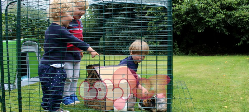 Outdoor_guinea_pig_run_2x2x1_children_playing_with_guinea_pigs