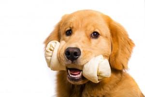Retriever-dog-food-1024x683