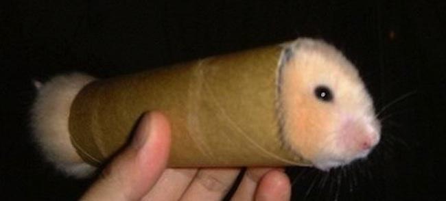 ban hamster uy tin ha noi
