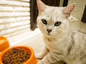 cat-food-shutterstock_136997981