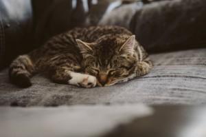 cat-kitten-kitty-animal-85126