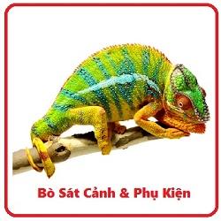 chameleons-video-160