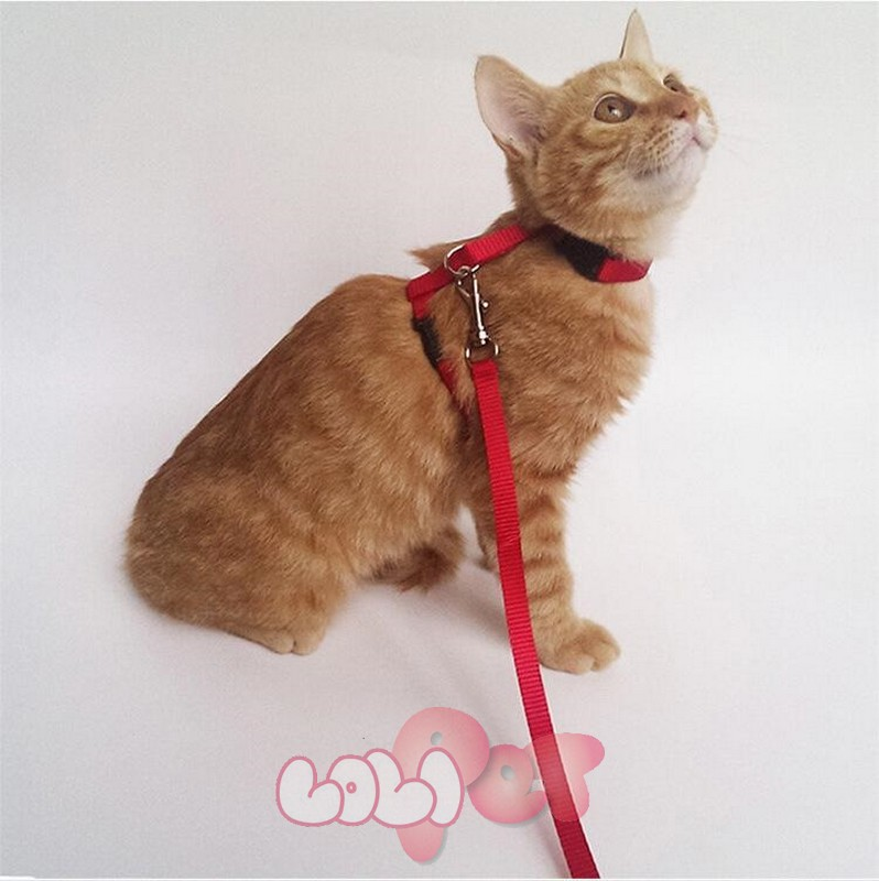 dây dắt mèo astro 1