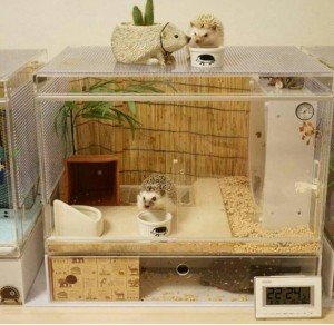 d11f5ec098b808995e4a6ecbb9c84a11--hedgehog-habitat-hedgehog-home