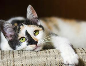 feline-immunodeficiency-virus-186498028