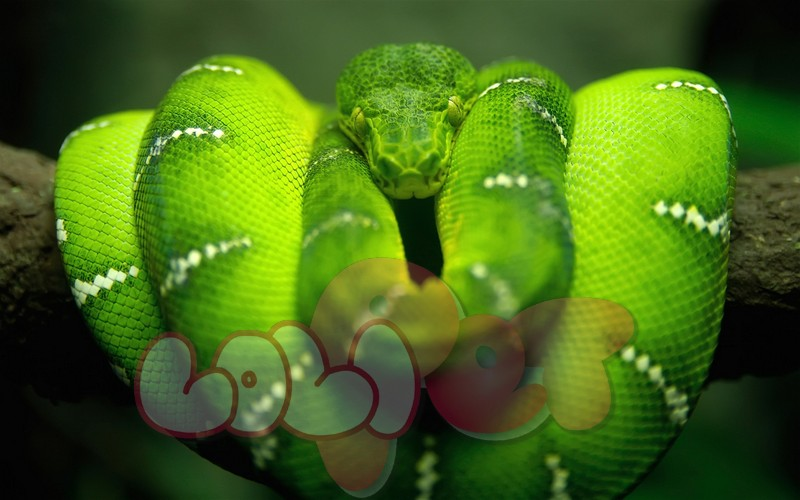green_tree_python_2560x1600