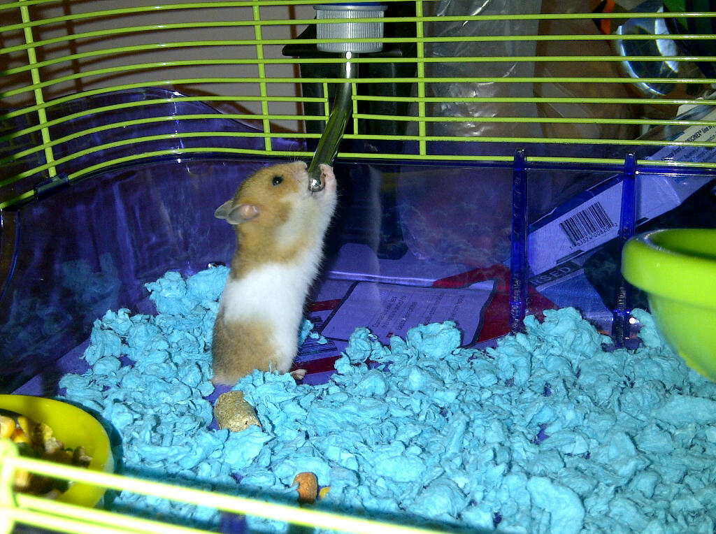 hamster bear cage