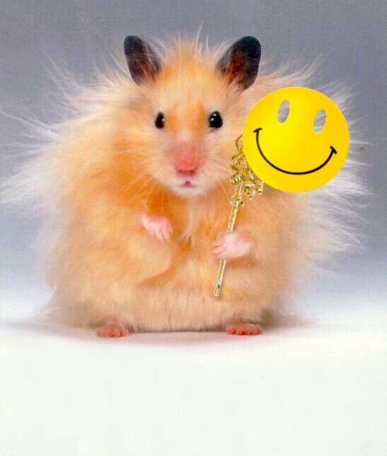 giá hamster bear đẹp tại lolipet hà nội