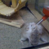 hamster robo 3