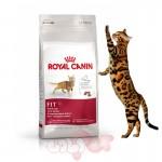 hat-thuc-an-kho-cho-meo-royal-canin-fit32