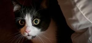 hero-anxious-cat