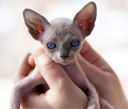 kittens-for-adoption-P10432