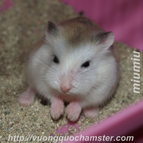 số 1 ngõ 244 kim mã địa chỉ mua hamster ở hn giá rẻ nhất