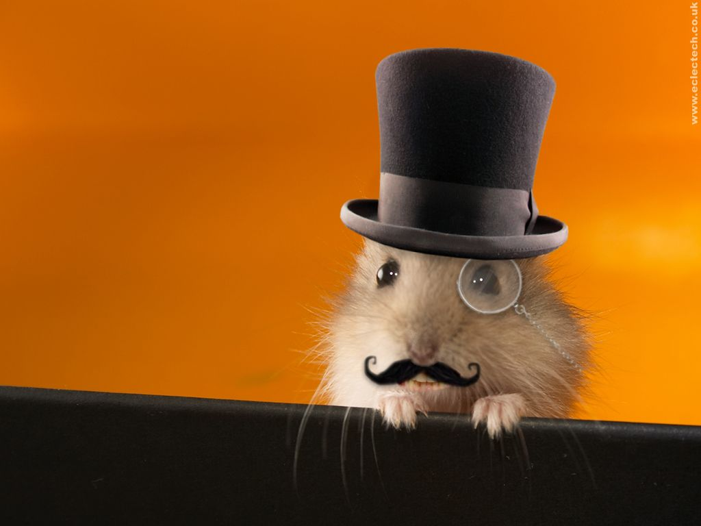 địa chỉ mua hamster uy tín ở hà nội