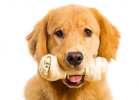 Có cần thiết cho chó gặm xương canxi không ? - Lolipet - Chuyên chuột  hamster , chó cảnh , mèo cảnh , nhím cảnh , thỏ cảnh