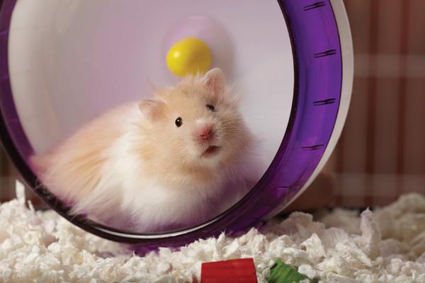 petsmart-hamster-playing-in-wheel