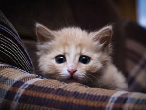 scared-kitten-shutterstock_191443322